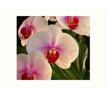 *** REFINEMENT AND CHARM ~ ORCHID PHALAENOPSIS *** Art Print