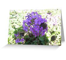 Pretty Purple Flowers Greeting Card