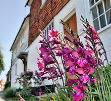 Gladiolus In The Weald by Dave Godden