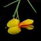 Stinkwood flower by Rick Playle