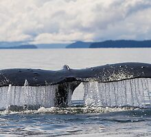 Whale Tail by Gina Ruttle  (Whalegeek)