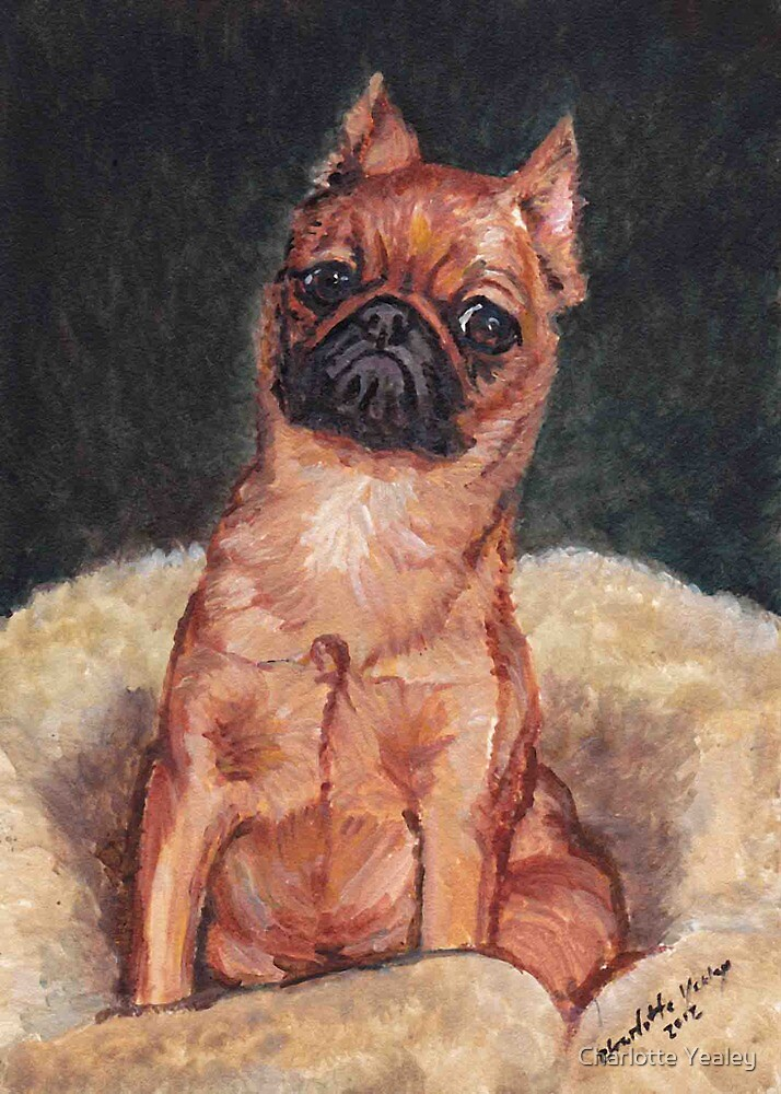 Toby the Brussells Griffon by Charlotte Yealey