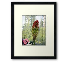 Torch Flower Framed Print