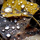Autumn raindrops by Christine Ford