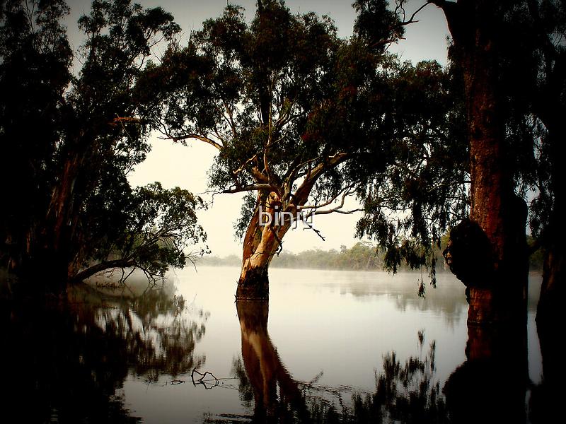 First Fog of Autumn by binjy