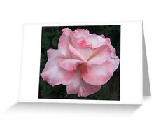 Rose in the dark Greeting Card