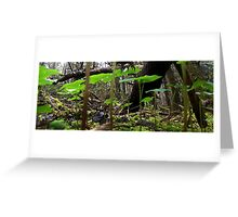 Forest canopy Greeting Card