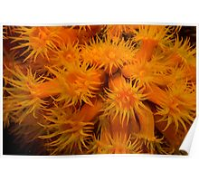 Orange Cup Coral Poster