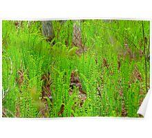 Fern Meadow Poster