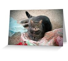 Christmas Kitty Greeting Card