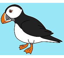 Black & White Puffin Bird with Orange Feet Photographic Print