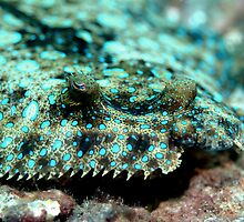 Peacock Flounder by KSBailey