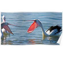 Pelicans & Married Life Poster
