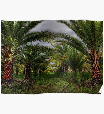 Palm Plantation Poster