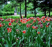 Field of Tulips by Larry Trupp