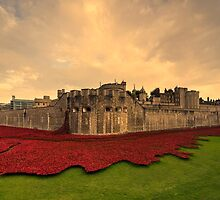 The Tower Poppies  by Rob Hawkins