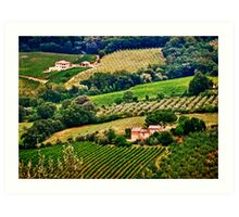 Vineyards and Olive Orchards Art Print
