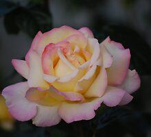 Yellow Pink by Eileen Aquiningoc  Schwake