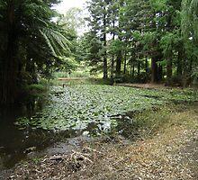 Lake, Rotary Park by cadellin
