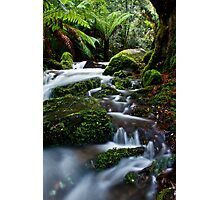 Gem Of The Forest Photographic Print