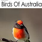 Birds Of Australia Calendar Number 1 by mosaicavenues