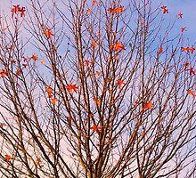 Late Orange Autumn by kahoutek24