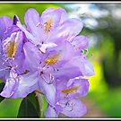 Violet Rhododendron by TomRaven