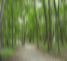 Forrest in Motion - green by KUJO-Photo