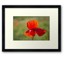 Poppy Butterfly Framed Print