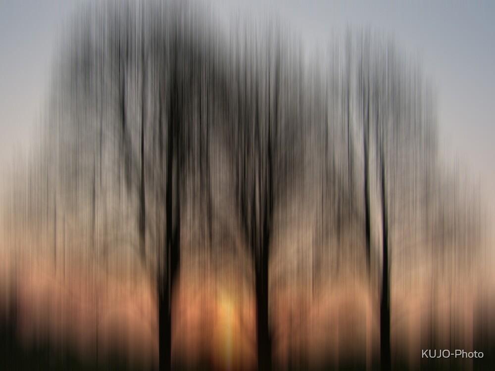 Three Trees in the Morning Light by KUJO-Photo