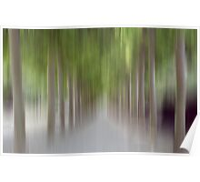 Avenue of Trees in Motion, Brussels Poster