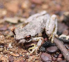Bleating Tree Frog by EnviroKey
