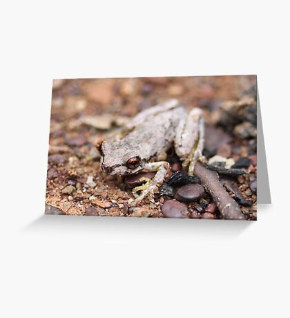 Bleating Tree Frog Greeting Card