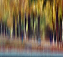 Trees in Motion by KUJO-Photo