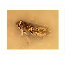 Common Froglet in amplexus Art Print