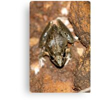 Broad-palmed Rocket Frog Canvas Print