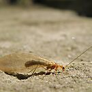 Unidentified insect by CapturedByKylie