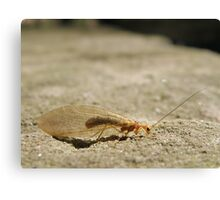 Unidentified insect Canvas Print