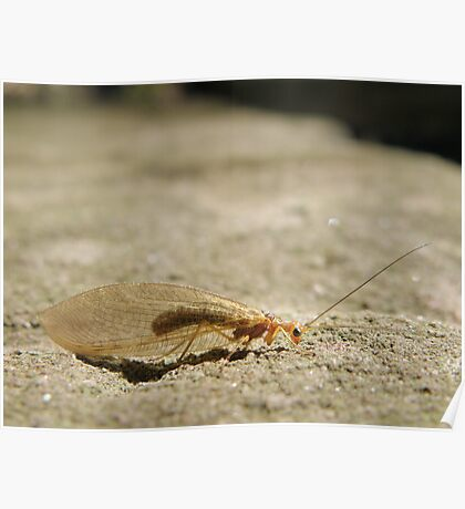 Unidentified insect Poster