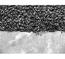 Sunflowers by Ai Weiwei Photographic Print