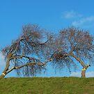Kissing Trees by KUJO-Photo