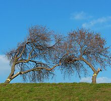 Kissing Trees by KUJO-Photo