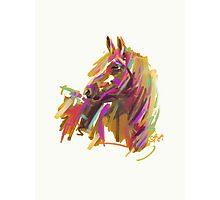 Horse true colours  Photographic Print