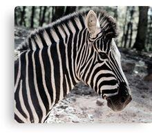 Zebra at the Zoo Canvas Print