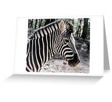 Zebra at the Zoo Greeting Card