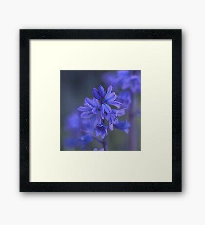 Bluebell Haze Framed Print