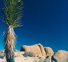 Stone Face, Joshua Tree National Park, California by Pete Paul