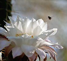 Buzz off by wildmanaz