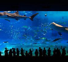 Chaurami Aquarium Whale Shark Tank by jswolfphoto