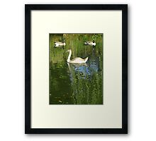 Two Geese and Swan Framed Print